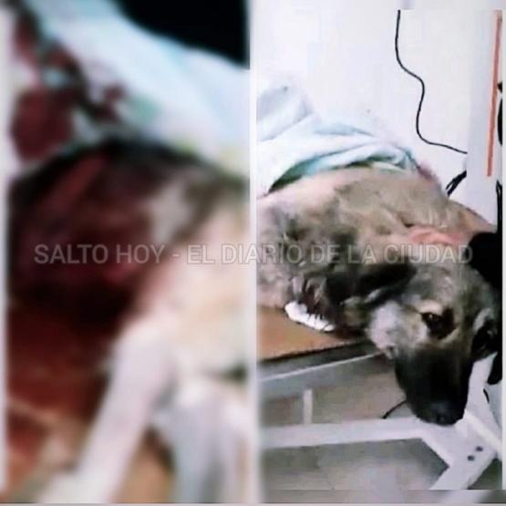 Matan de una puñalada a un perro en Salto