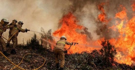 Fuego en el amazonas: tras la presión internacional, Bolsonaro exigió tomar