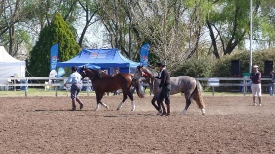 Expo Rural en Apas: Cronograma de actividades para este domingo