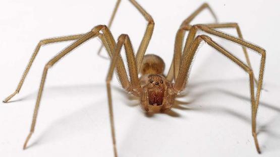Temor en Junín: un hombre se encuentra peleando por su vida tras ser picado por una araña
