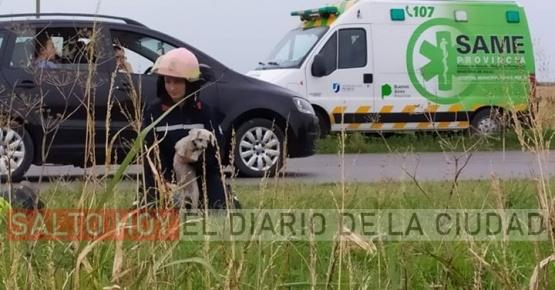 Amor perruno: Bomberos de Arroyo Dulce rescataron a la mascota de una familia accidentada en la ruta 32